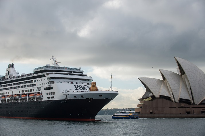 Giant Cane Toad Invades NSW on P&O's State of Origin Cruise